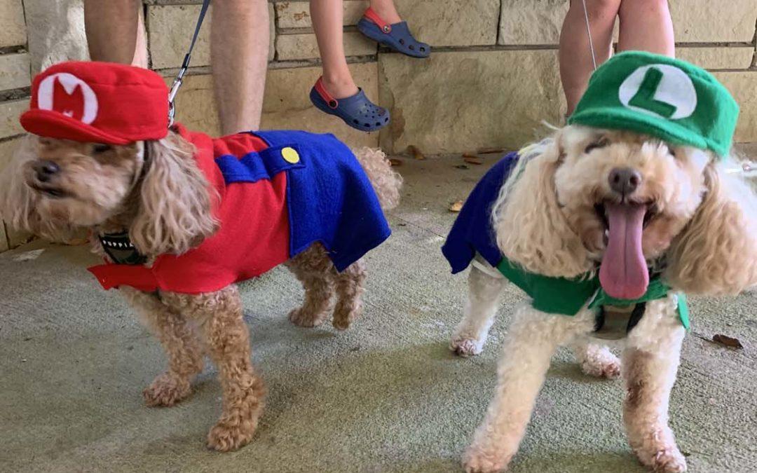 Octoberfest Dog Parade Photo Gallery